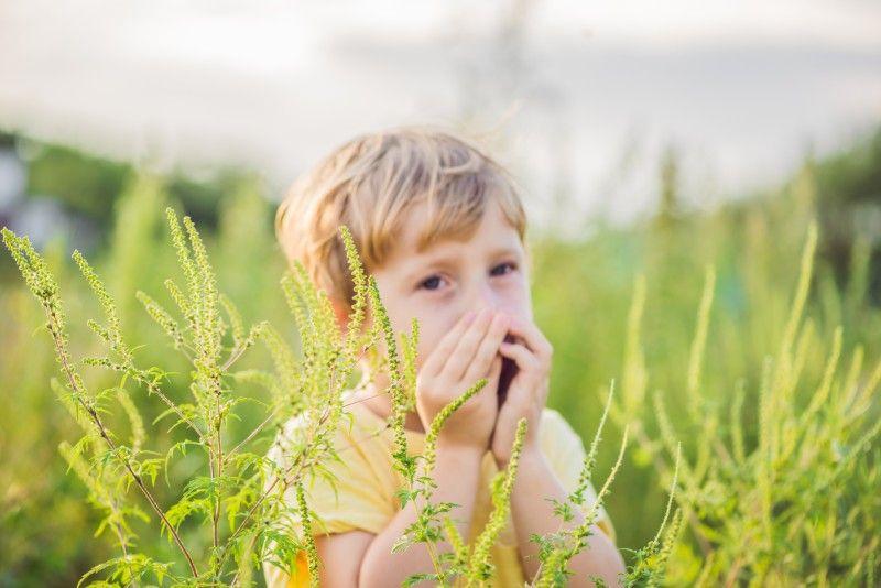 Come curare le allergie